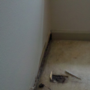 Flooring mold damage
